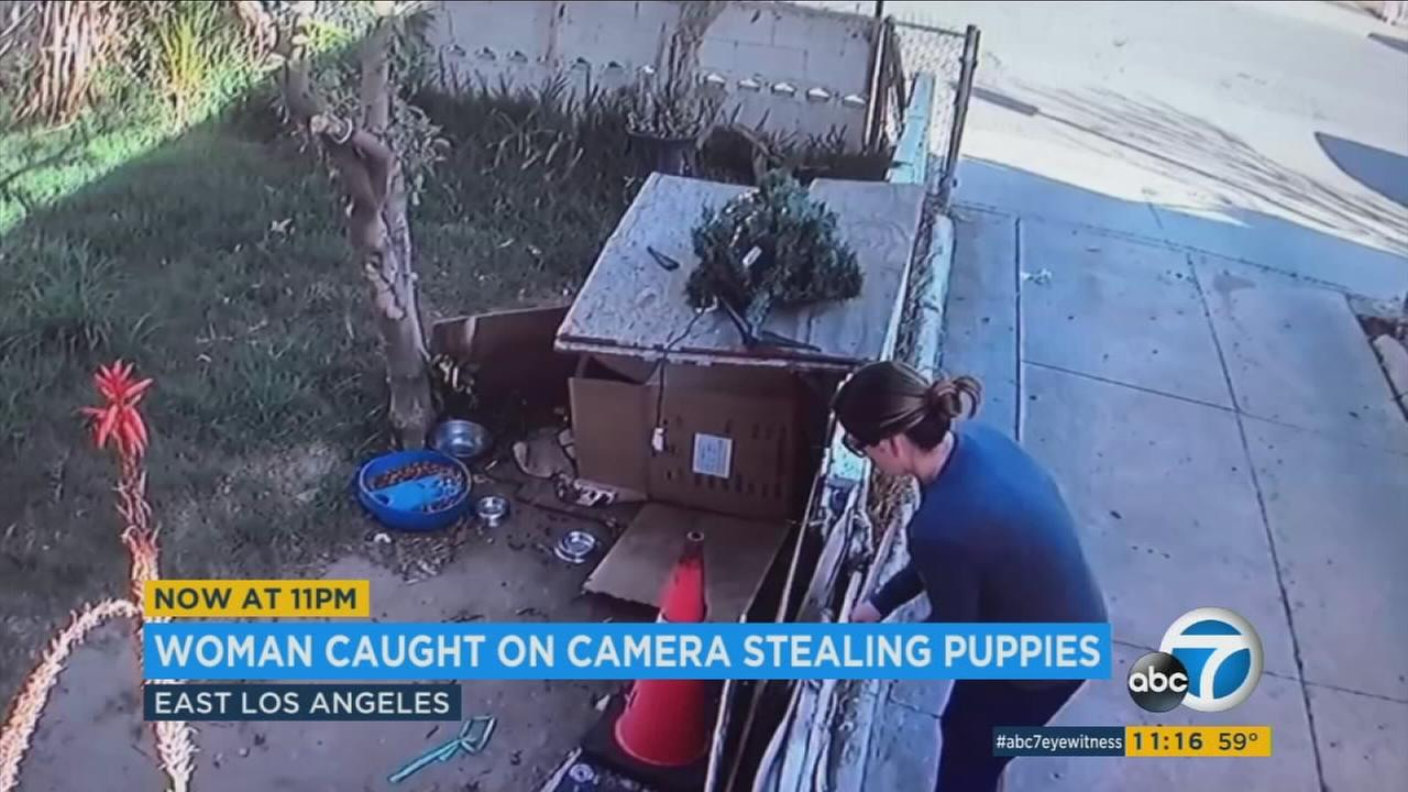 A brazen puppy theft was caught on camera in East Los Angeles.