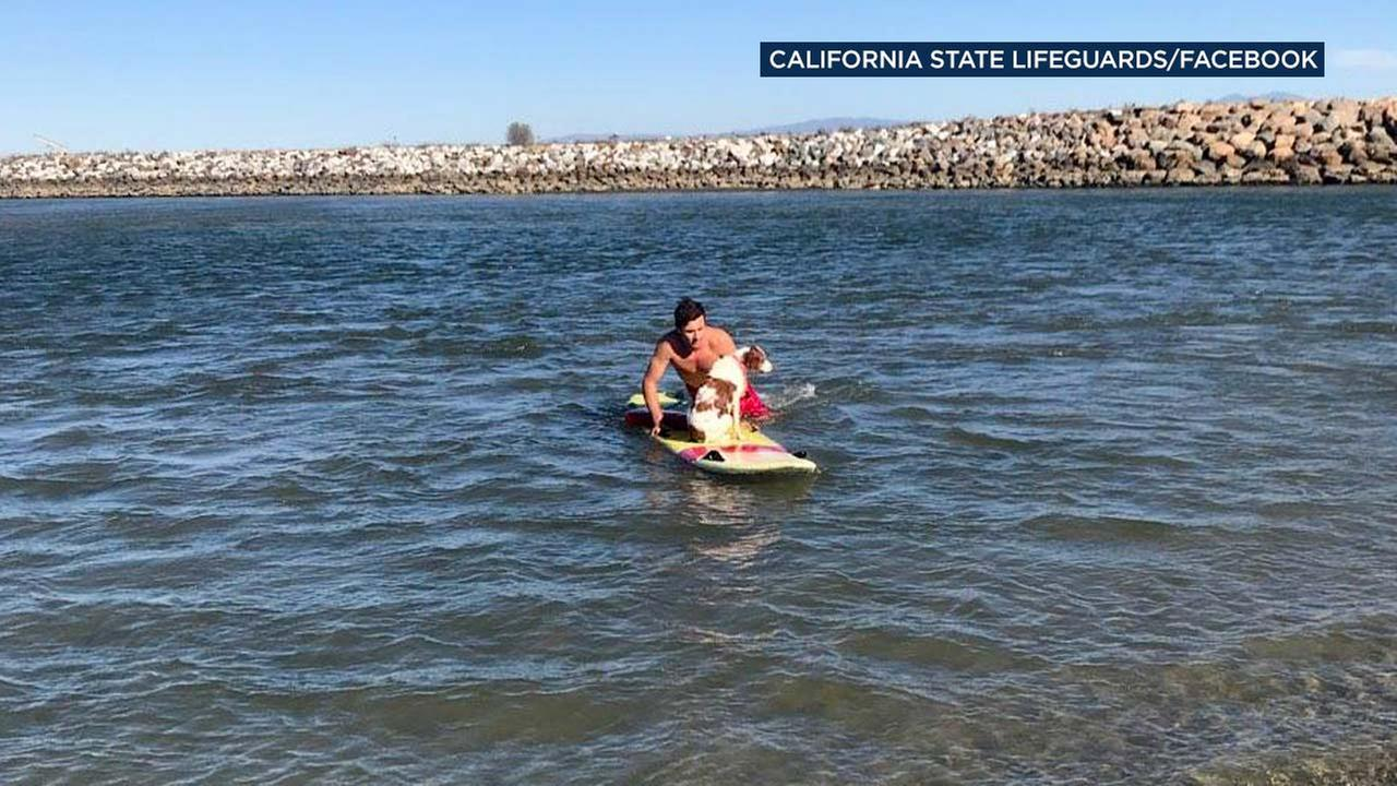 Two Orange County lifeguards went above and beyond to rescue a pair of dogs in distress.