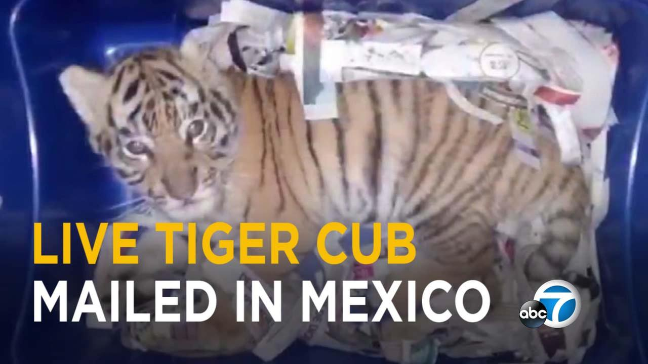 Mexican authorities said someone tried to express-mail a tiger cub.