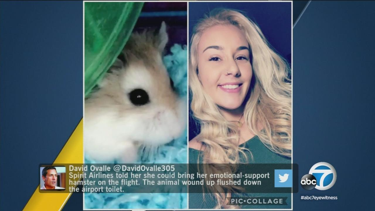 A Florida woman says an airline told her to flush her hamster down a toilet at the airport because the emotional support rodent wasnt allowed to fly with her.