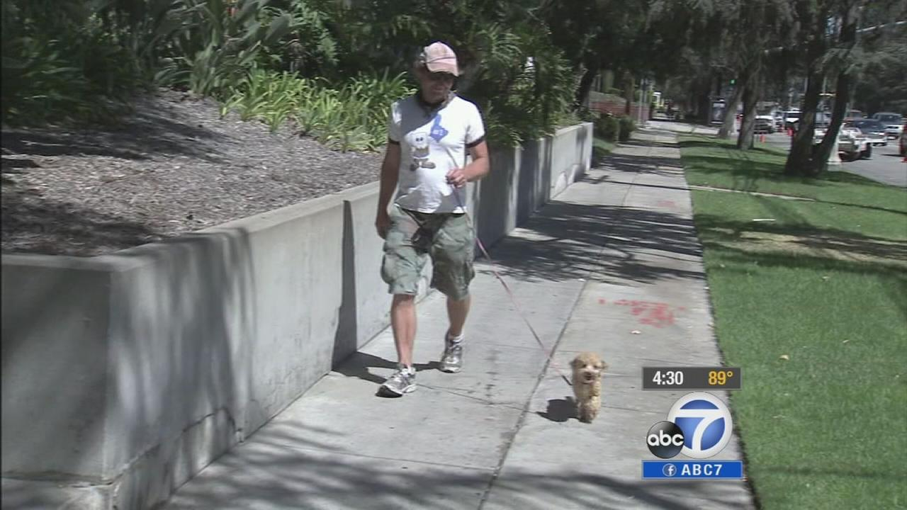 Within the next month, dog owners who do not leash their dogs could face hefty fines under a new ordinance.
