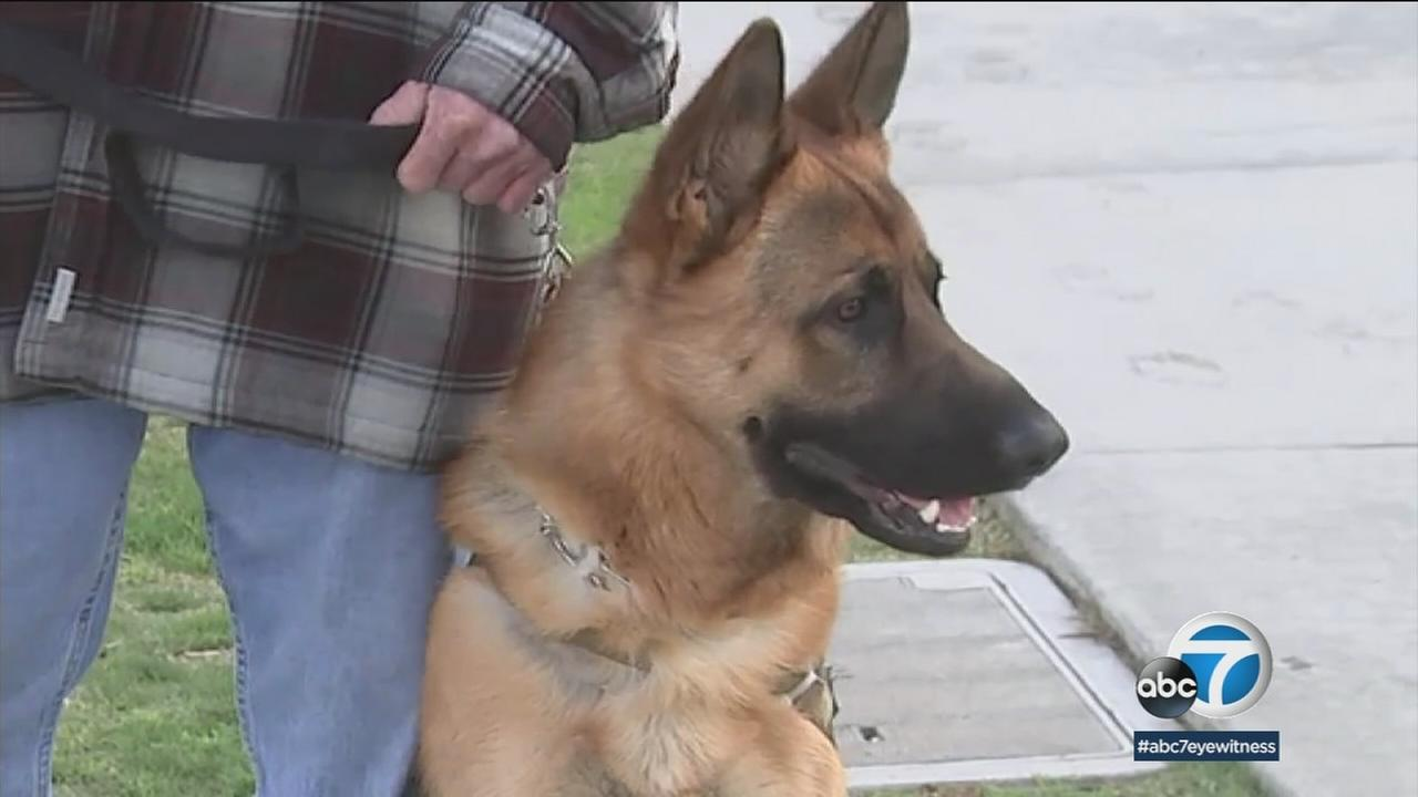 What do you do after life as a Navy Seal? One local man found his true calling: training service dogs for veterans.