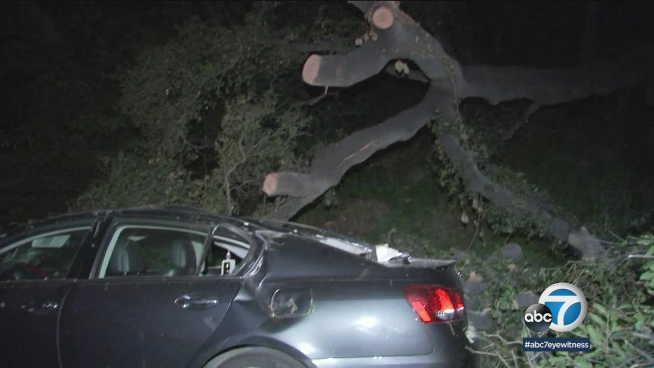 A large oak tree fell on and trapped a woman in her 70s as she was walking down the street in Glendale Sunday, officials said.