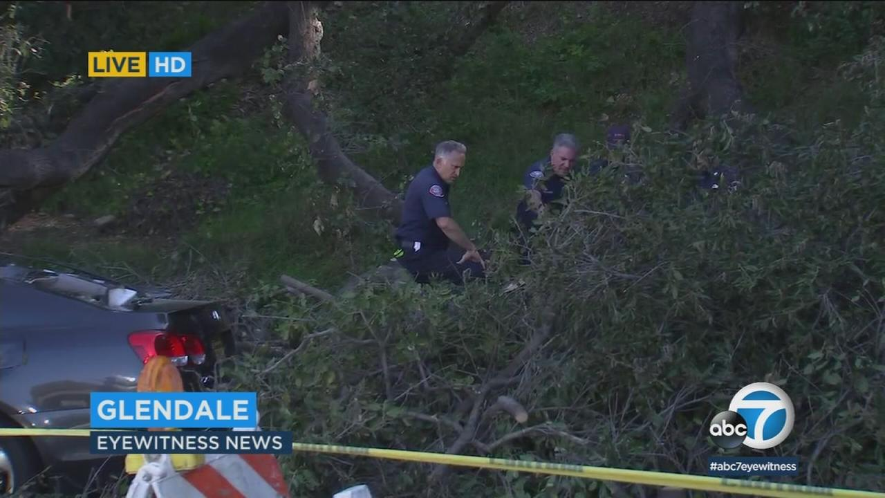 Firefighters are examining an oak tree that fell in a Glendale neighborhood, injuring a 77-year-old woman.