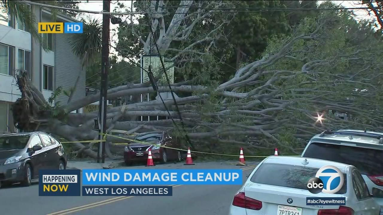 A fallen tree is seen atop a car in West Los Angeles on Friday, April 13, 2018.
