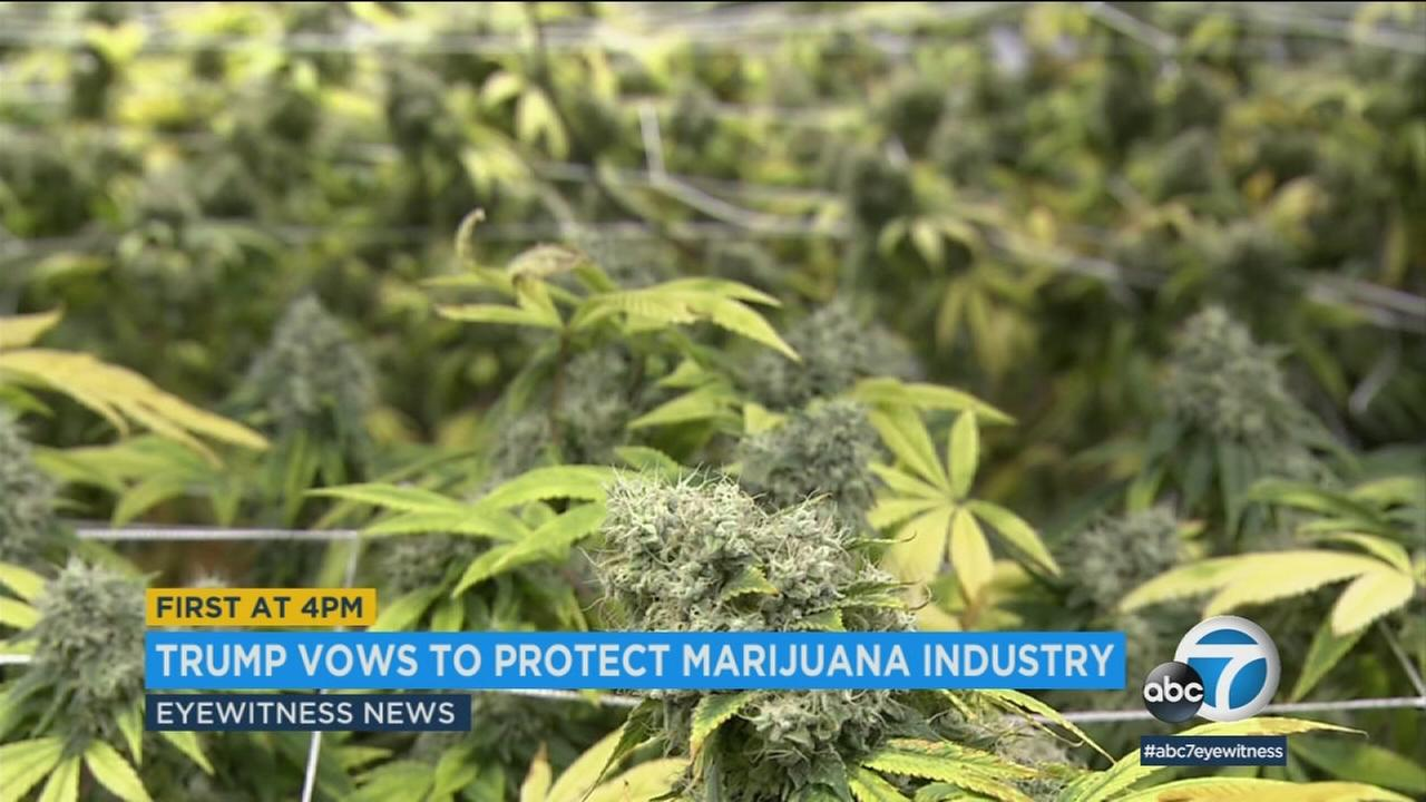 President Donald Trump has promised to support legislation protecting the marijuana industry in states that have legalized the drug.