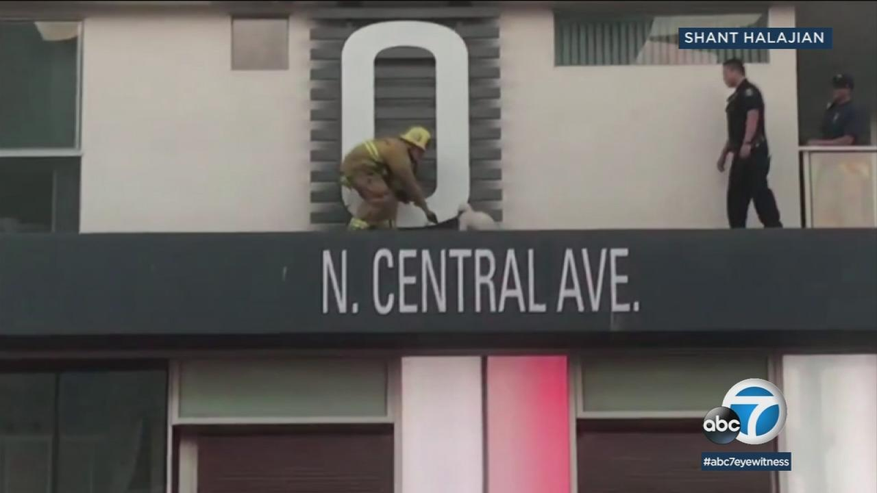 A firefighter walks on a building ledge to save a dog who somehow ended up there.