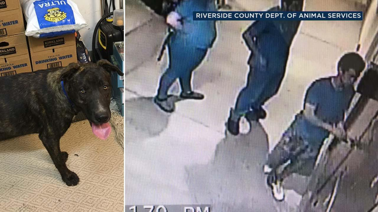 This surveillance image shows three people breaking into a compartment at a Jurupa Valley animal shelter and taking a dog.