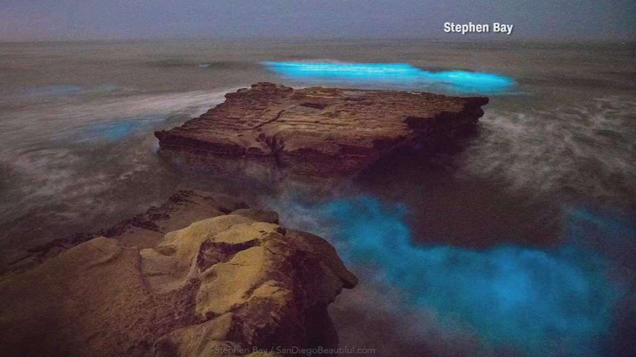 An algae bloom filled with bioluminescent phytoplankton lights up the night surf in San Diego.