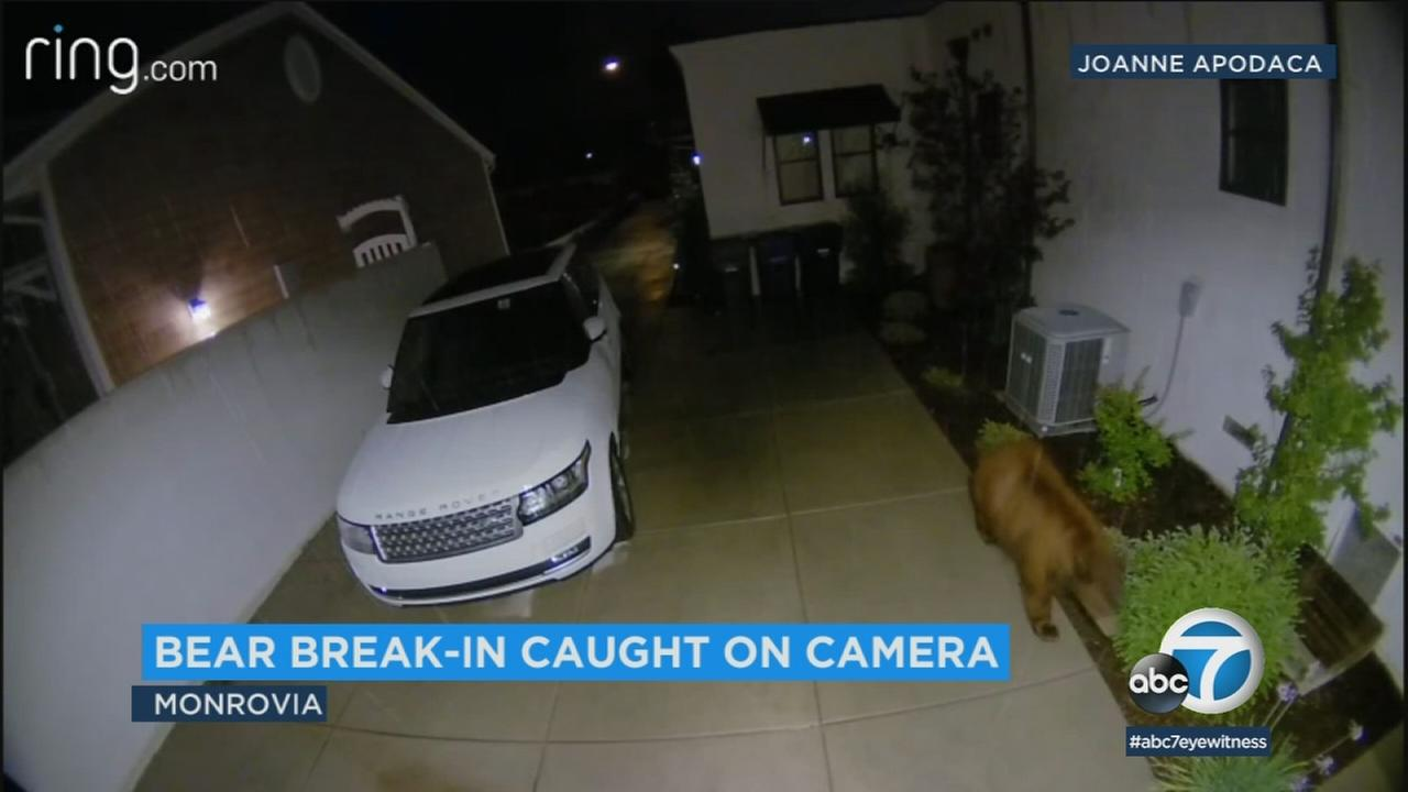 Surveillance video shows a bear pushing into the crawl space of a Monrovia home.