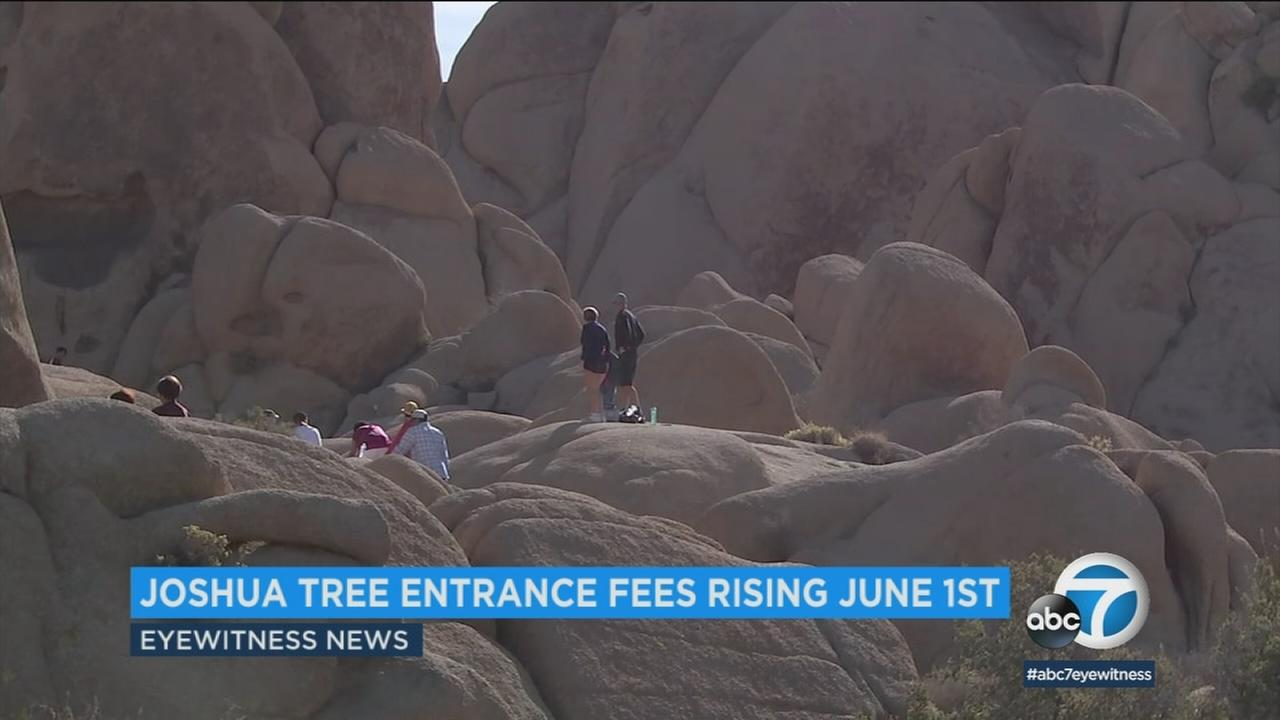 People visiting Joshua Tree National Park are shown in a photo.