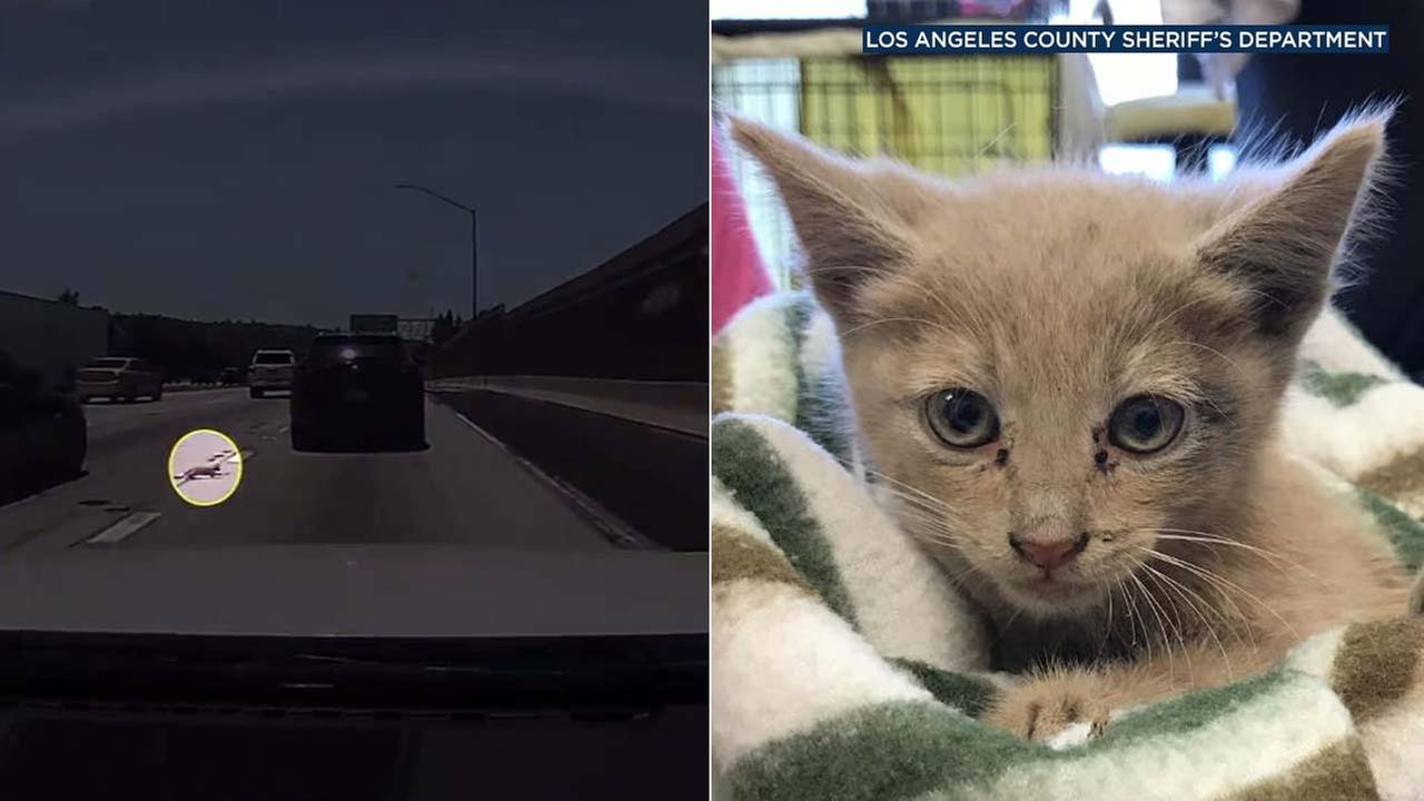 (Left) Video shows a kitten running across lanes of the 60 Freeway in Diamond Bar. (Right) LASD posted this photo of the kitten after it was rescued.