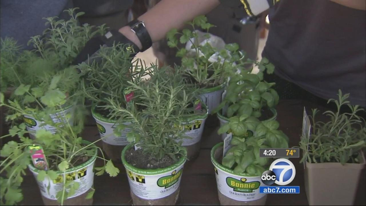 Two brothers are planting a garden of fragrant herbs at the Braille Institute of Americas Orange County Center as part of an Eagle Scout project.