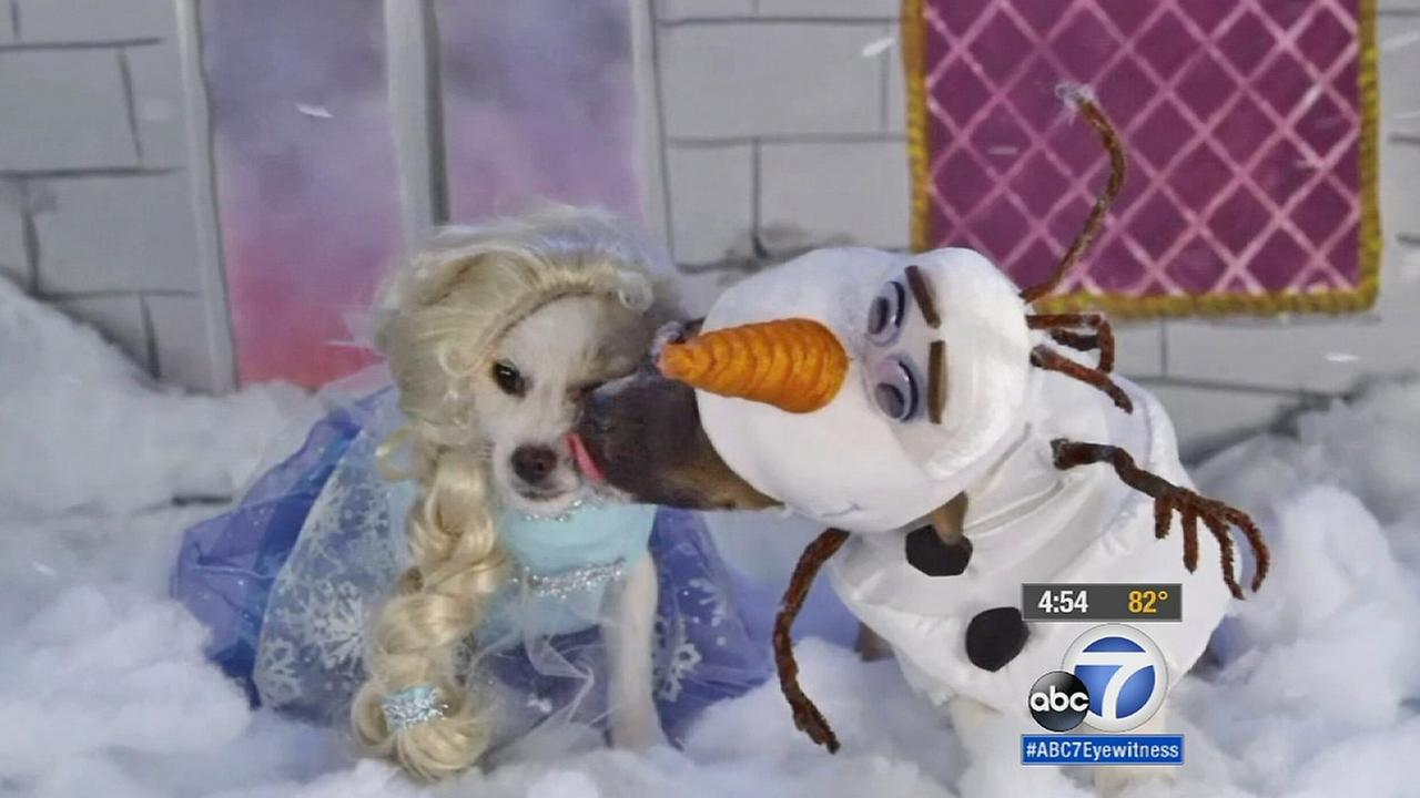 Two puppies are dressed as characters from Disneys Frozen.