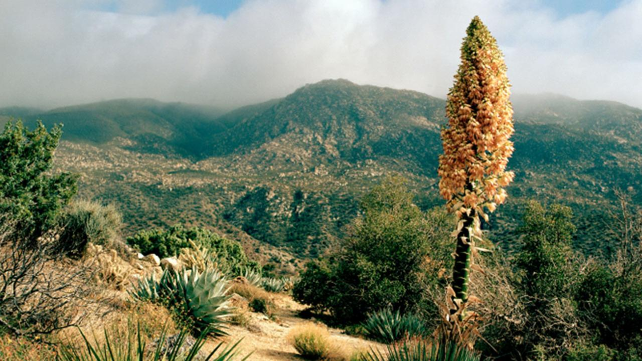Palm Desert is shown in this undated file photo.