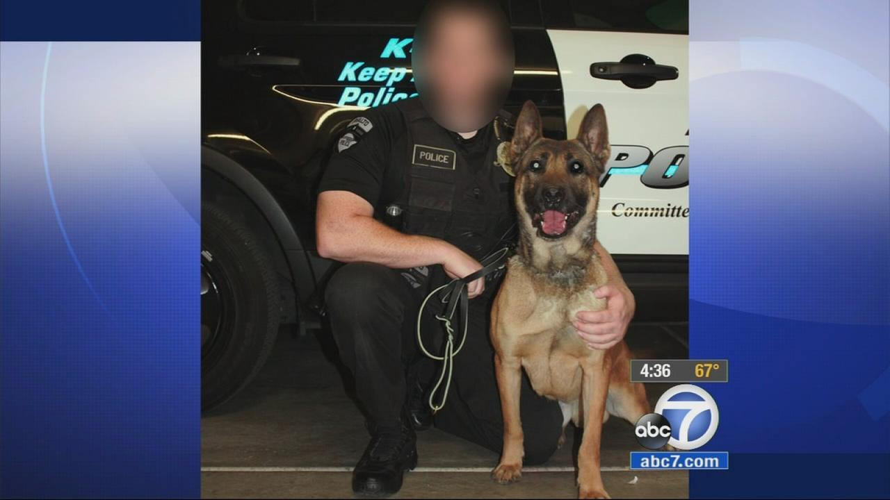 A Rialto police dog who mauled his handlers 4-year-old son will not be euthanized, but he will be retired, according to Rialto police.