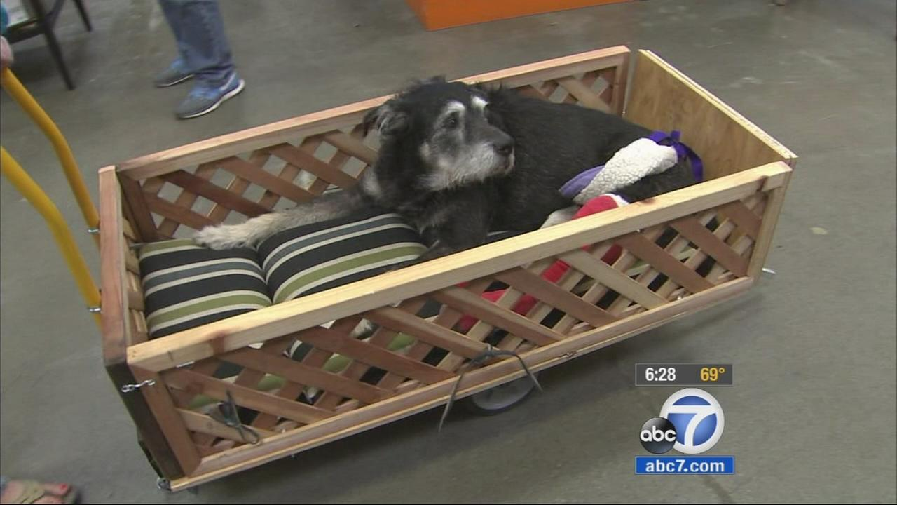 Ike, a 15-year-old dog battling cancer in his leg, received a custom-built wagon Thursday thanks to the kindness of two Home Depot employees in Hawthorne.