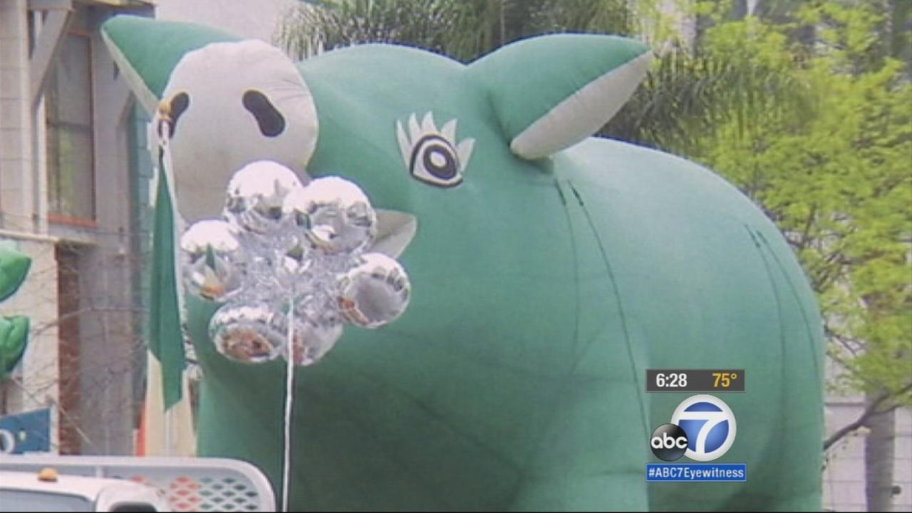 In Ventura, Sham Hock, a giant green inflatable pig is a ham on the lam. The large hog is the face of Ventura Countys annual St. Patricks Day Parade, and its gone missing.