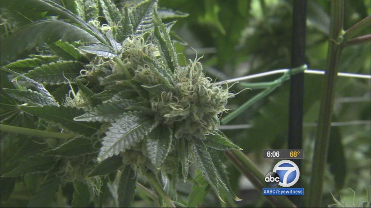 A fire in a Santa Ana office building led authorities to a hidden illegal marijuana farm Friday morning.