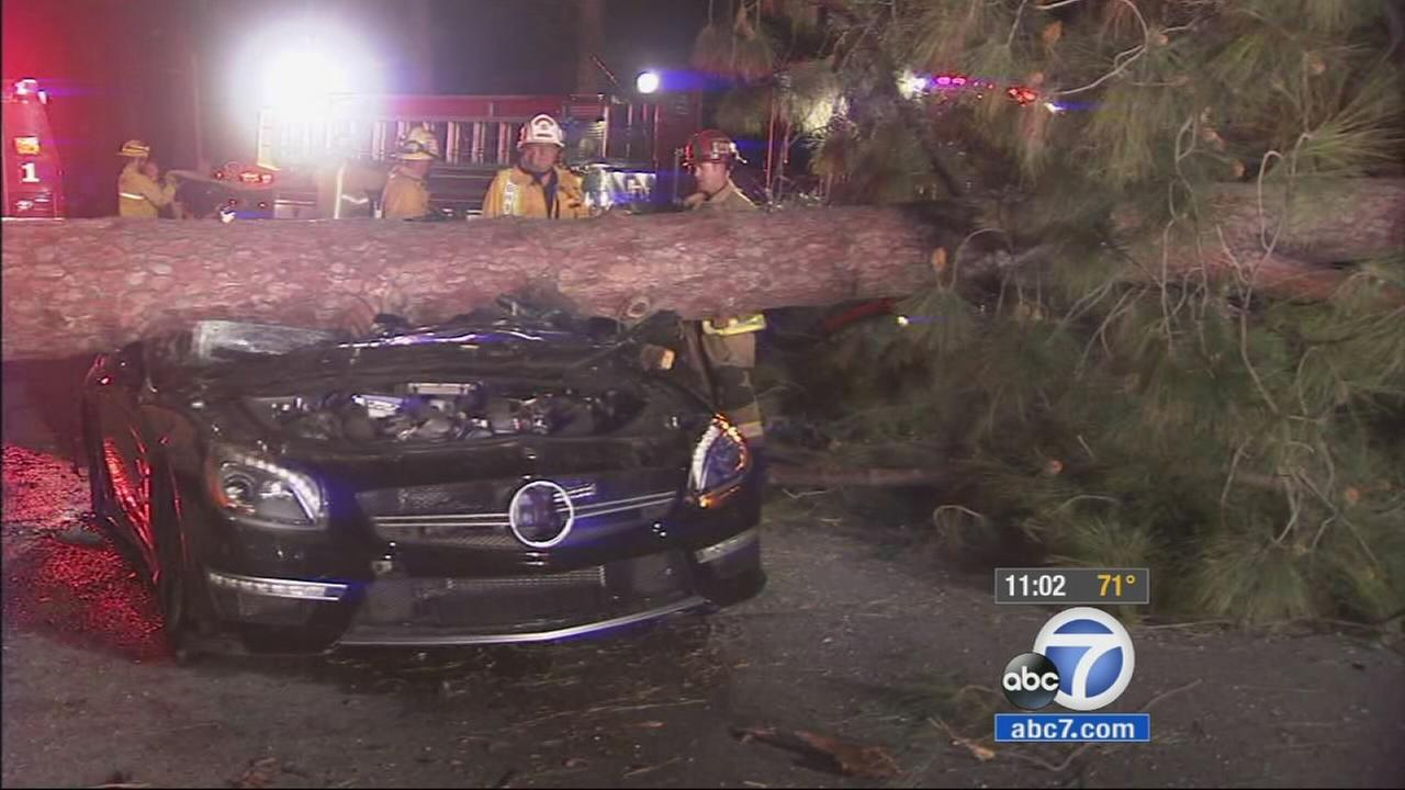 A man was rescued by firefighters after being trapped inside his car when a large pine tree that was uprooted by winds fell on it in Beverly Hills Tuesday night.