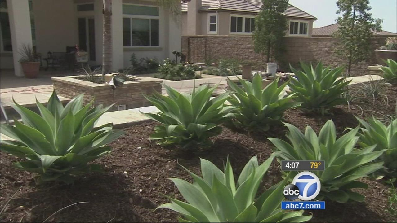 Drought tolerant plants are shown in front of a Yorba Linda home in this undated file photo.