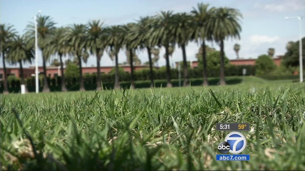 A lush green lawn in Newport Beach is shown in this undated file photo.