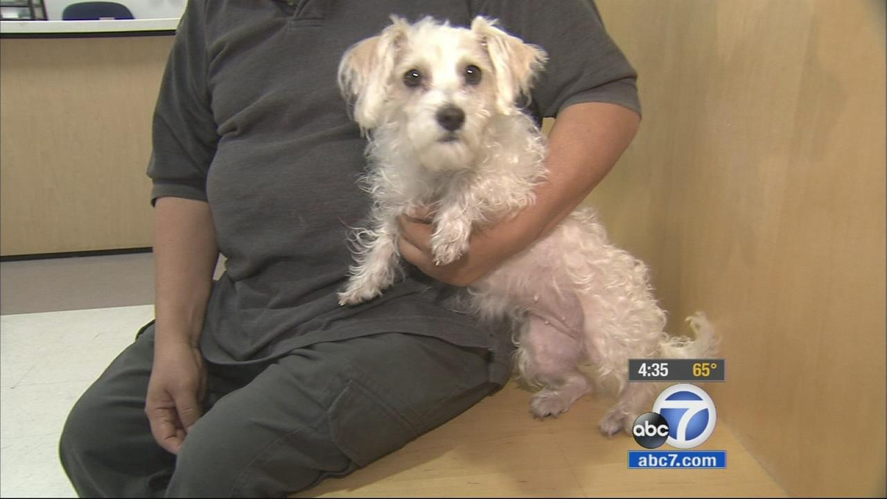 An Echo Park man has been reunited with his dog after two women impersonating Los Angeles Police Department Animal Cruelty Task Force officers stole his pet.