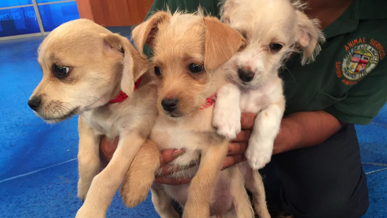 Our Pet of the Week segment on Tuesday, May 12, featured three Papillon mix puppies named Jazz, Tina and Gina. Please give them a good home!