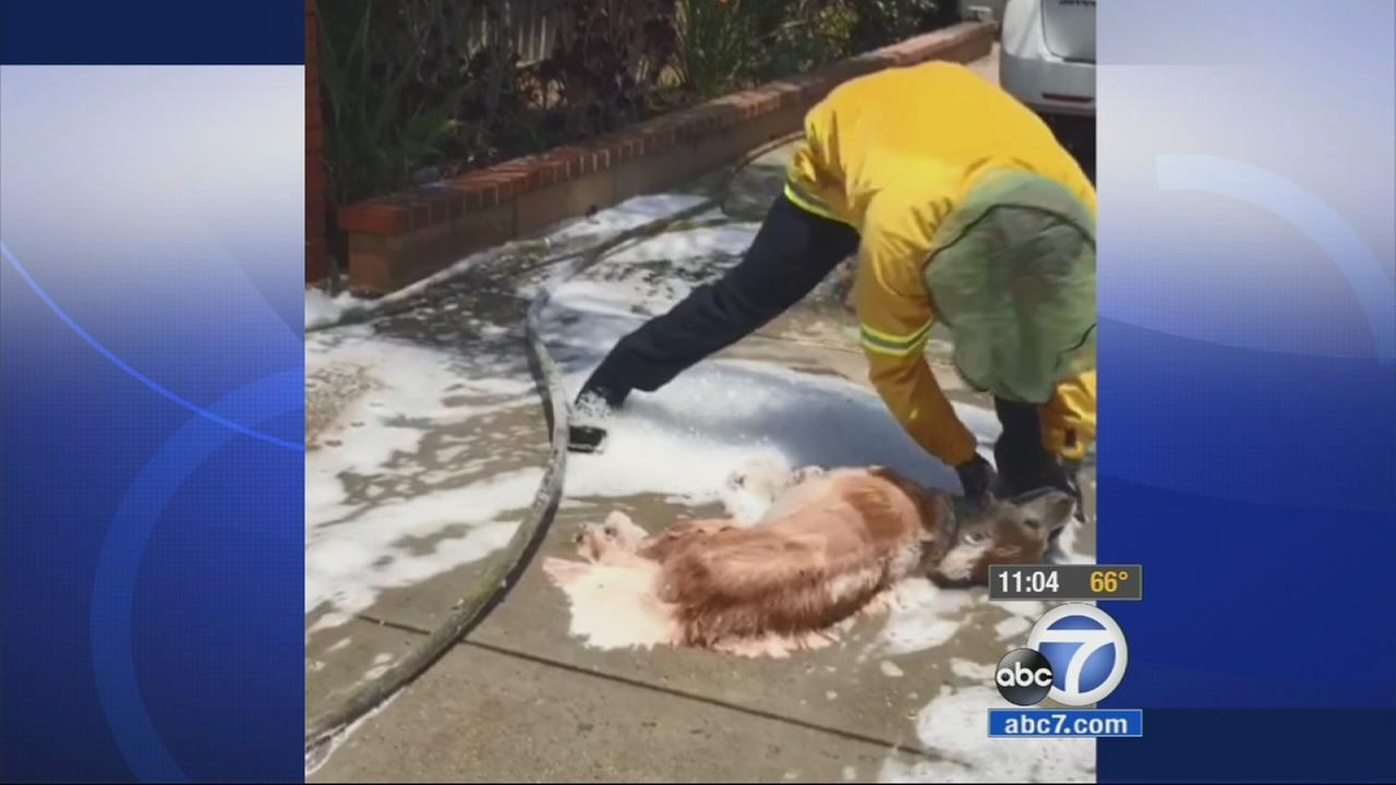 Bees attacked a 43-year-old man who was giving his dog a bath in their Loma Linda garage on Sunday.