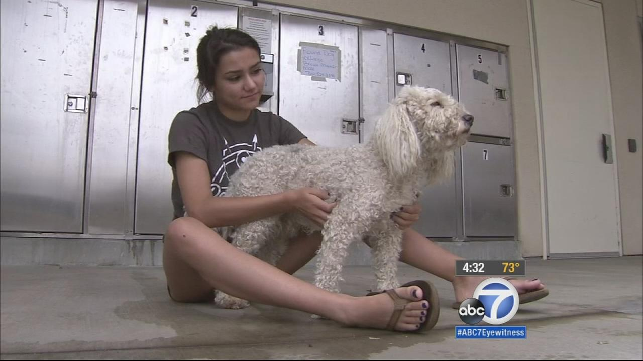 The Fourth of July may be over, but animal shelters and pet owners are still dealing with the aftermath of lost and missing pets.