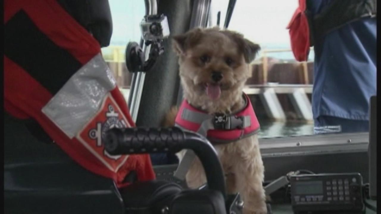 Barnacle, a 2-year-old terrier mix, is shown on a U.S. Coast Guard boat in Milwaukee.
