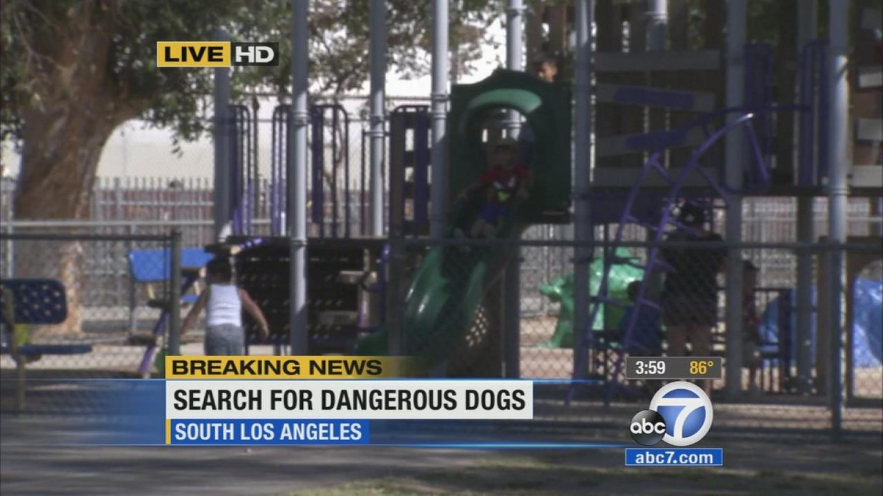 Los Angeles police officers combed the streets Wednesday in search of two vicious pit bulls who allegedly tried to attack people at a South Los Angeles park.