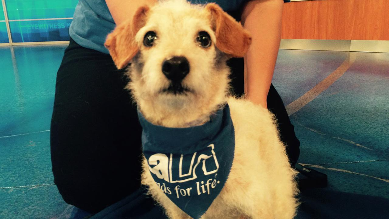 Our Pet of the Week on Thursday, Aug. 13, is a 7-year-old terrier mix named Dixie.