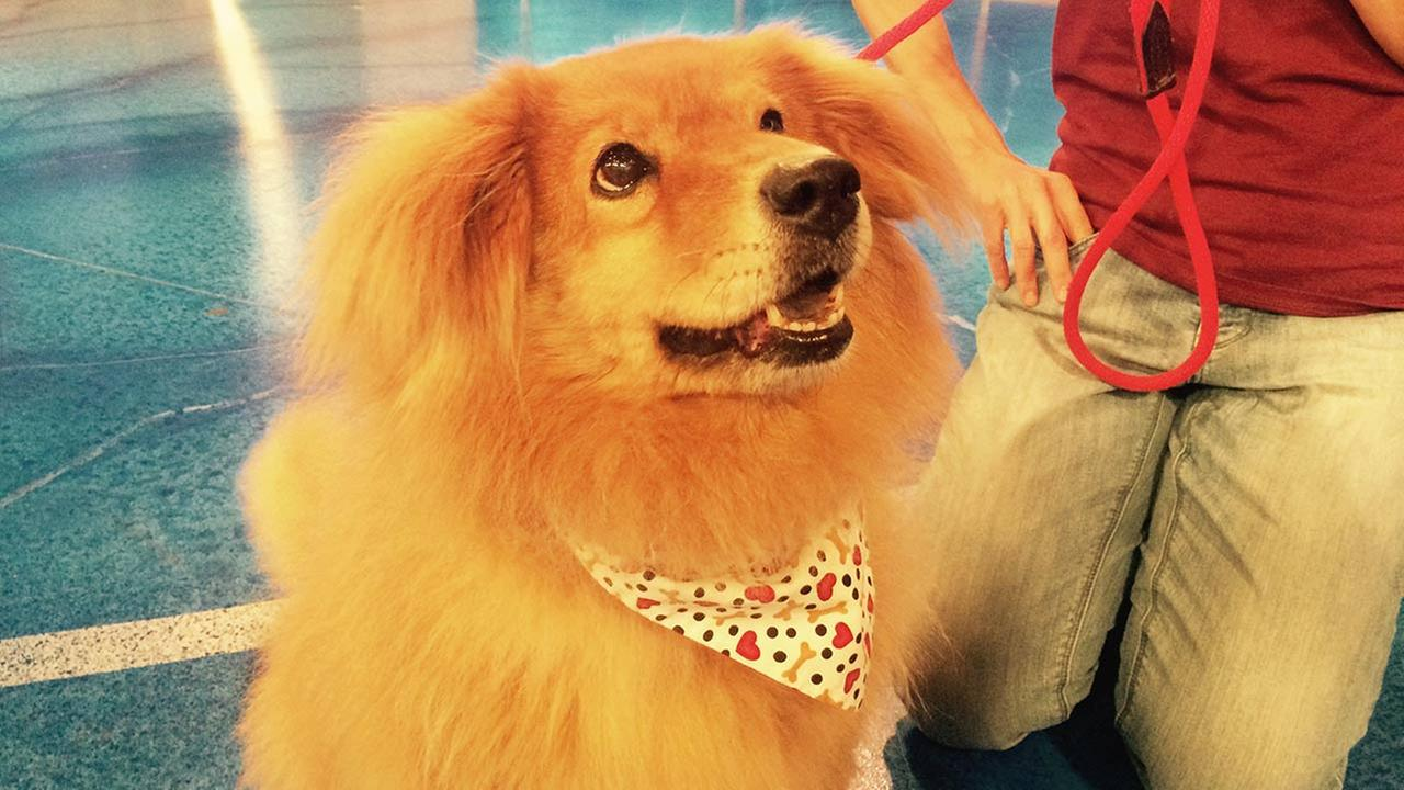 Our Pet of the Week on Thursday, Aug. 20, is an 11-year-old Golden Retriever mix named Bailey. Please give her a good home!