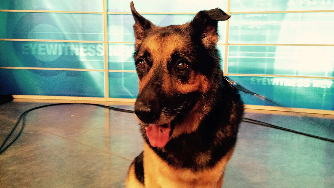 Our Pet of the Week on Thursday, Sept. 3, is a 9-year-old male German Shepherd mix named Louie. Please give him a good home!