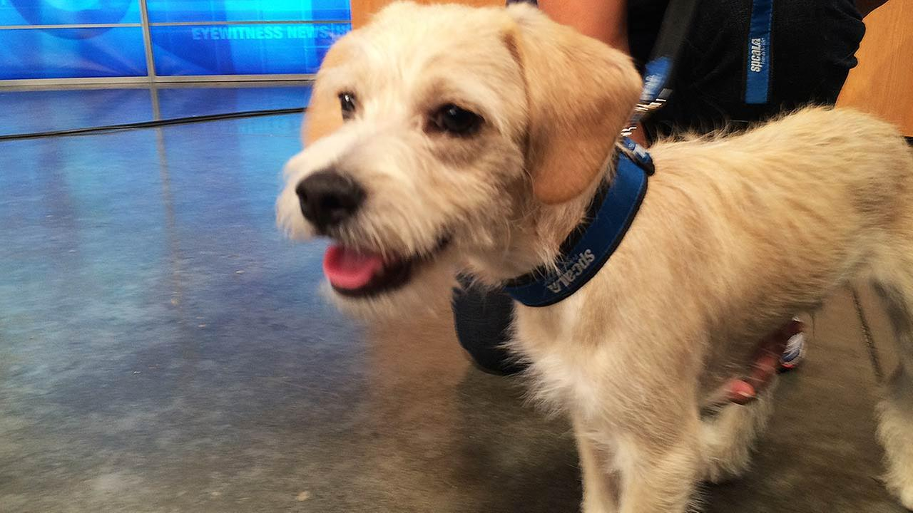 Our Pet of the Week on Thursday, Sept. 10, is a 5-month-old male terrier mix named Doug. Please give him a good home!