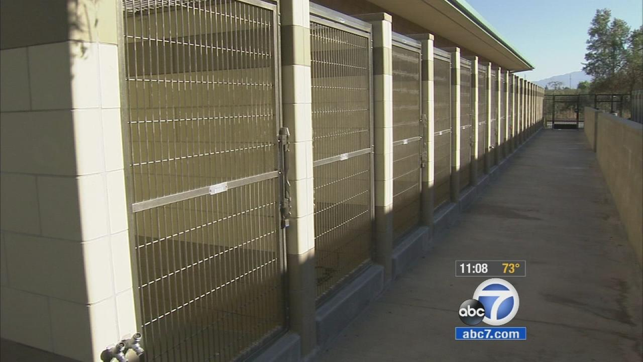 The abandoned kennels are shown after more than one dozen dogs were let loose at the Riverside County Animal Shelter in Jurupa Valley on Sunday, Sept. 13, 2015.