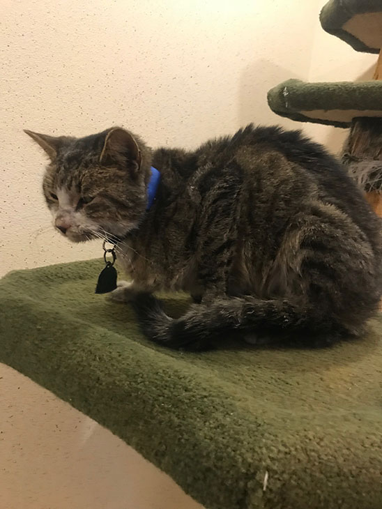<div class='meta'><div class='origin-logo' data-origin='KABC'></div><span class='caption-text' data-credit=''>Kitty Bitty seen recovering at an Inland Empire shelter after going missing from Georgia earlier this year and being found in Riverside County.</span></div>