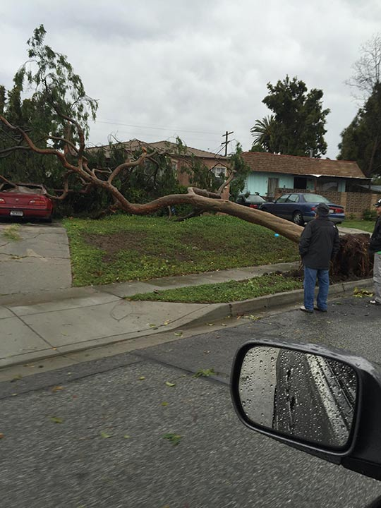 "<div class=""meta image-caption""><div class=""origin-logo origin-image kabc""><span>KABC</span></div><span class=""caption-text"">An ABC7 viewer shared this photo of a tree down in Inglewood on Monday, March 7, 2016. (ABC7 viewer)</span></div>"