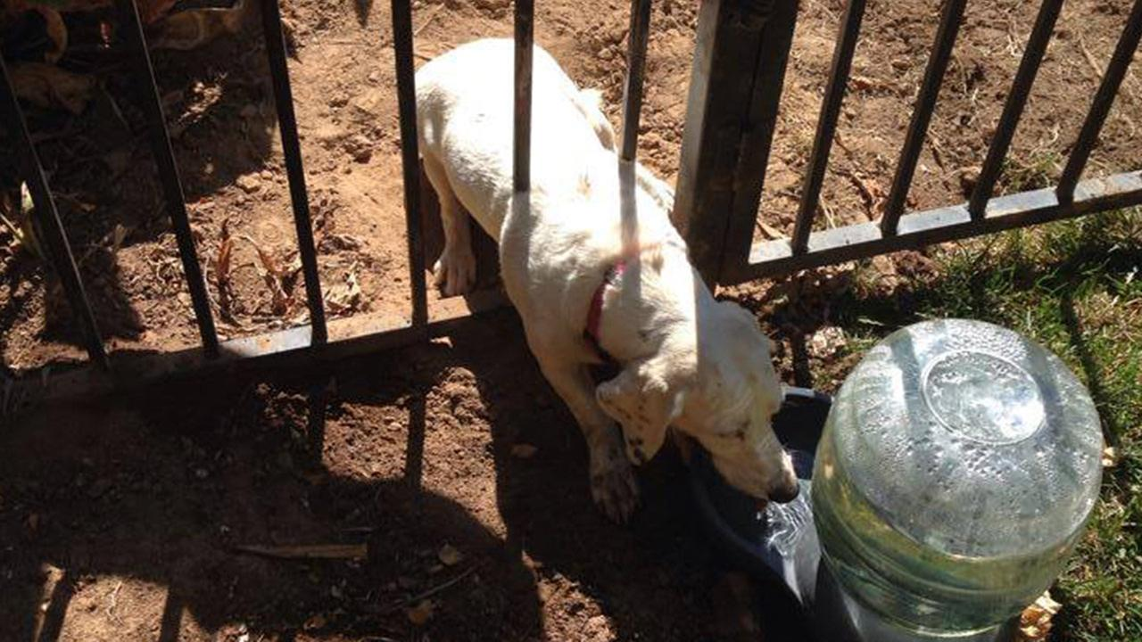 Fresno firefighters rescue dog stuck in fence - 1