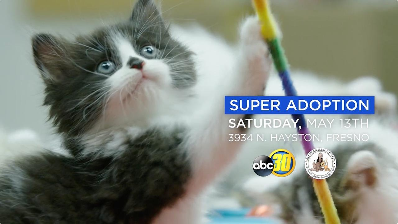 Join ABC30 & Valley Animal Center at Super Adoption