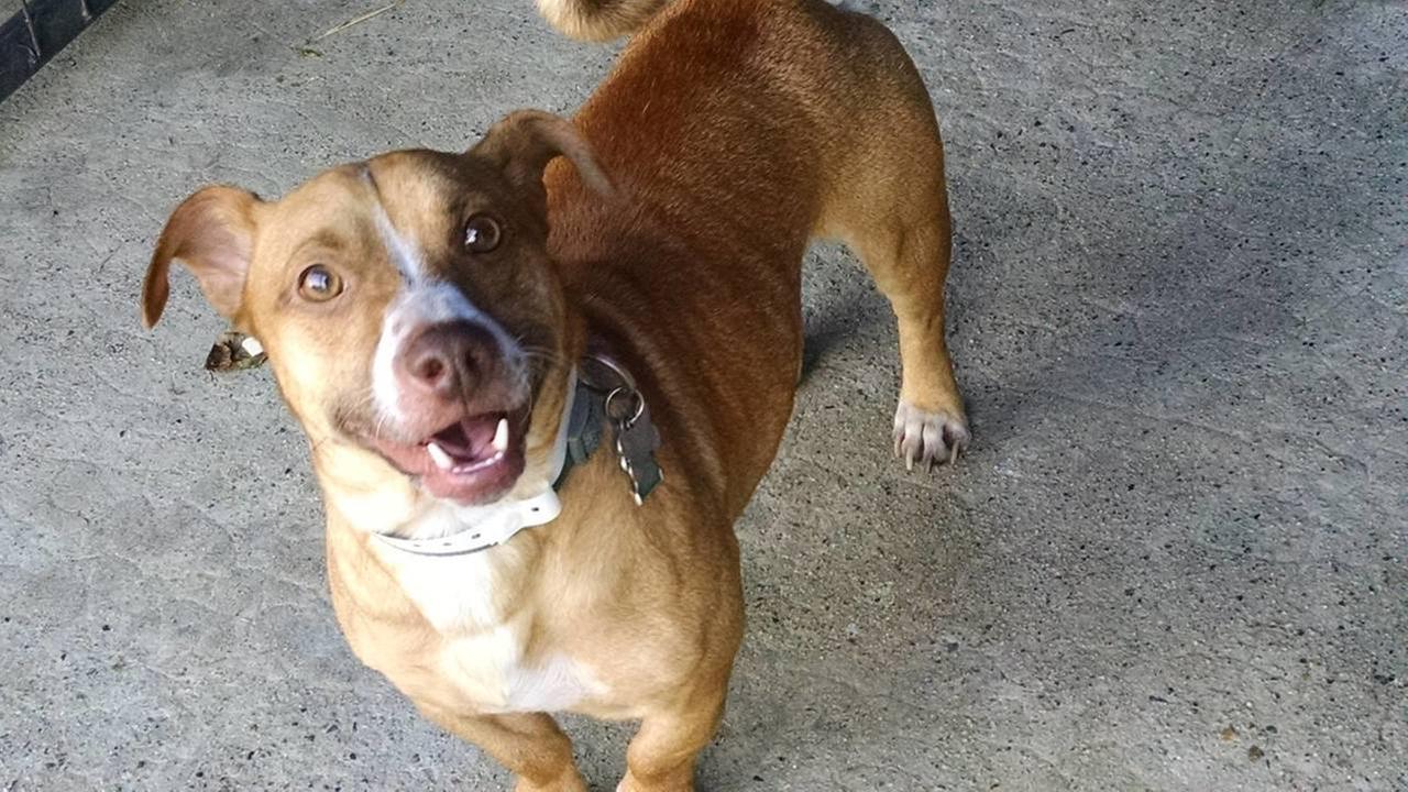 Former local media employee sentenced for animal cruelty
