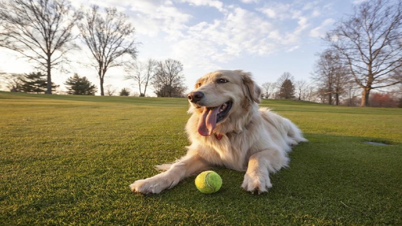 City of Clovis has zero dog parks, public meeting seeks to change that