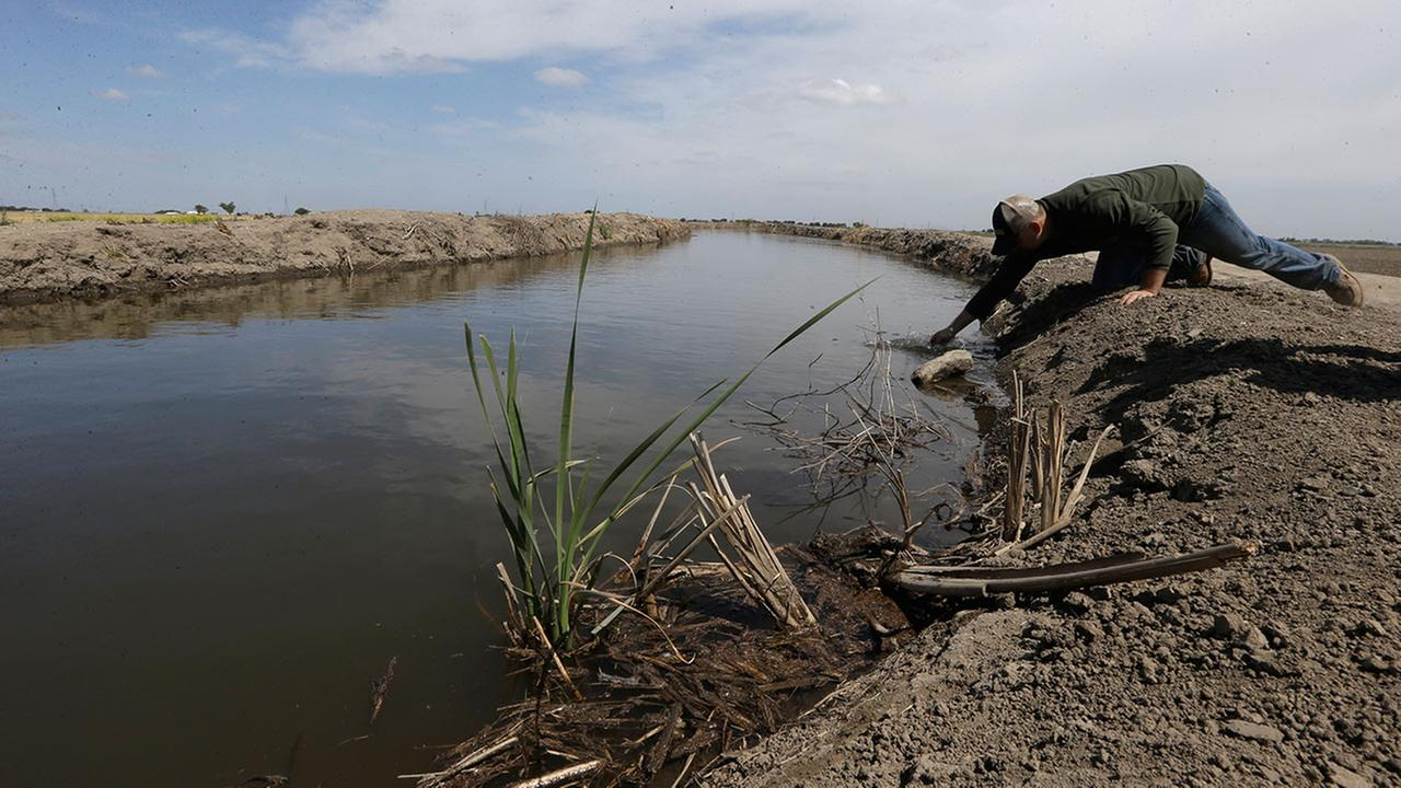 In this May 18, 2015 photo, Gino Celli draws a water sample to check the salinity in an irrigation canal that runs through his fields near Stockton, Calif.
