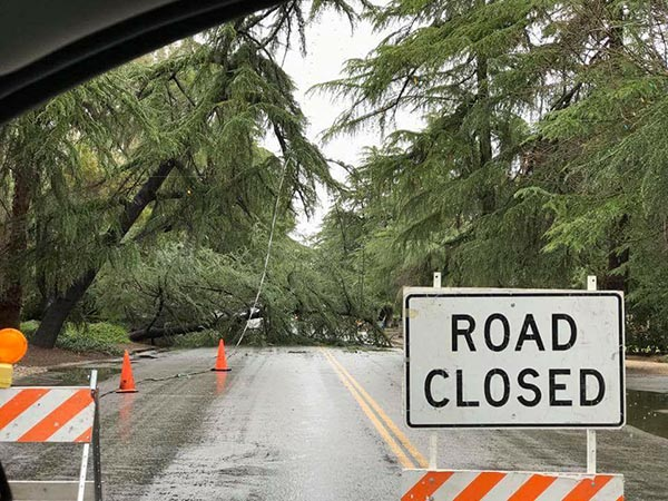 "<div class=""meta image-caption""><div class=""origin-logo origin-image none""><span>none</span></div><span class=""caption-text"">Tree falls on Christmas Tree Lane (Van Ness) in Fresno (Elizabeth Kirby)</span></div>"