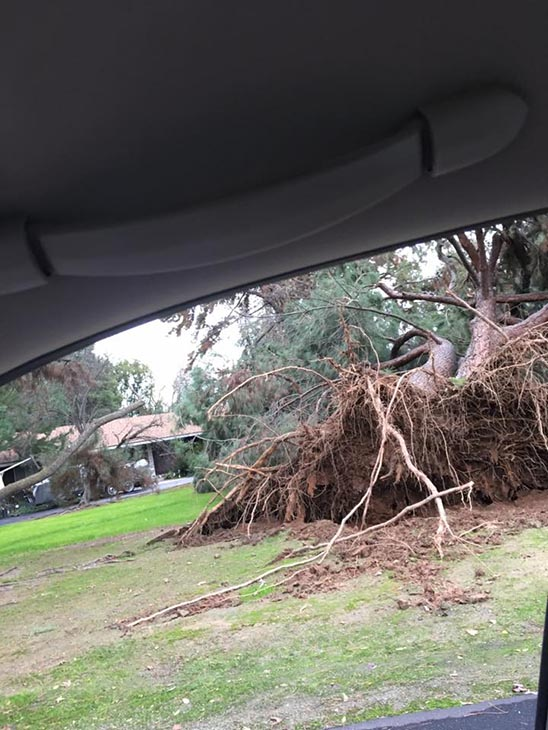 <div class='meta'><div class='origin-logo' data-origin='none'></div><span class='caption-text' data-credit='#abc30insider'>Tree falls on College and Holland in Old Fig Garden area.</span></div>