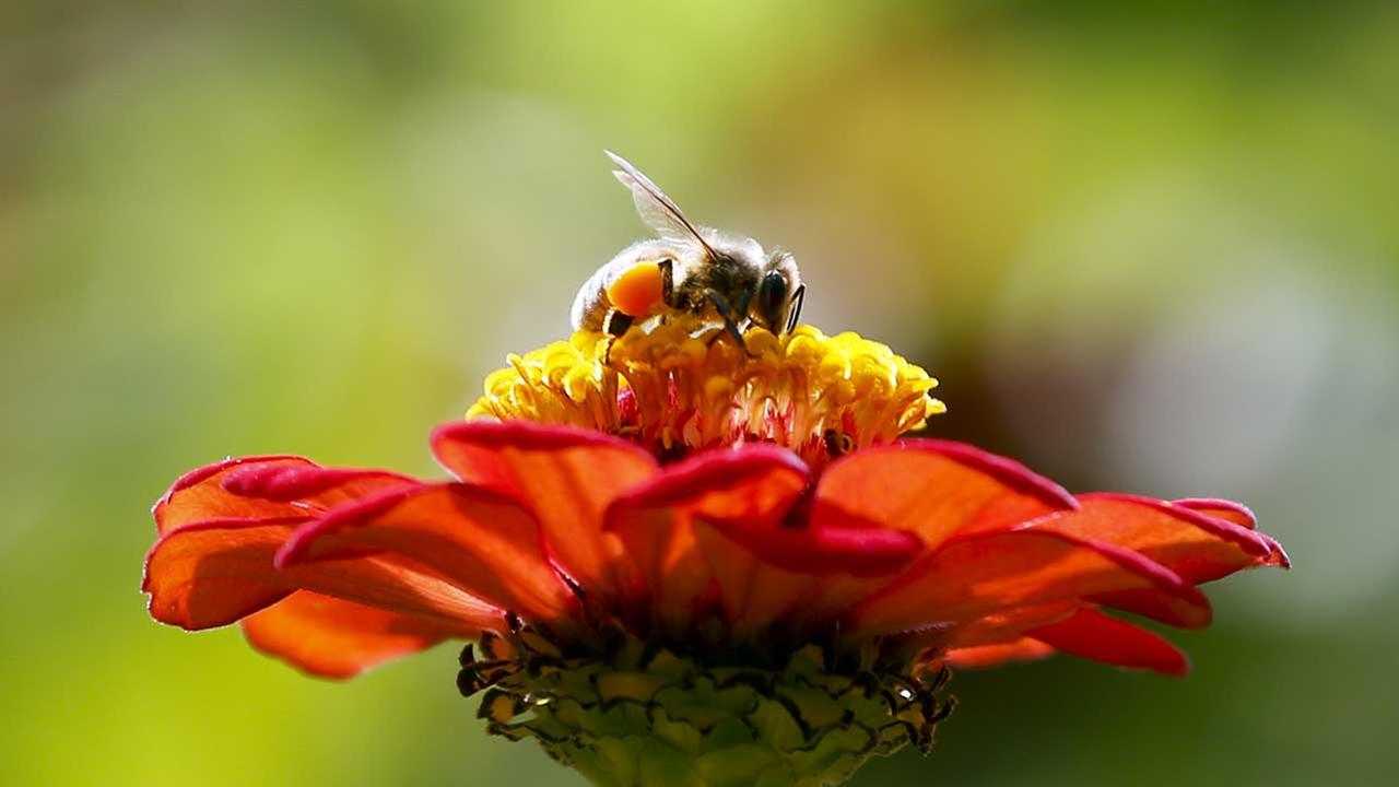Mysterious 'zombie bee' scourge reaches southern US