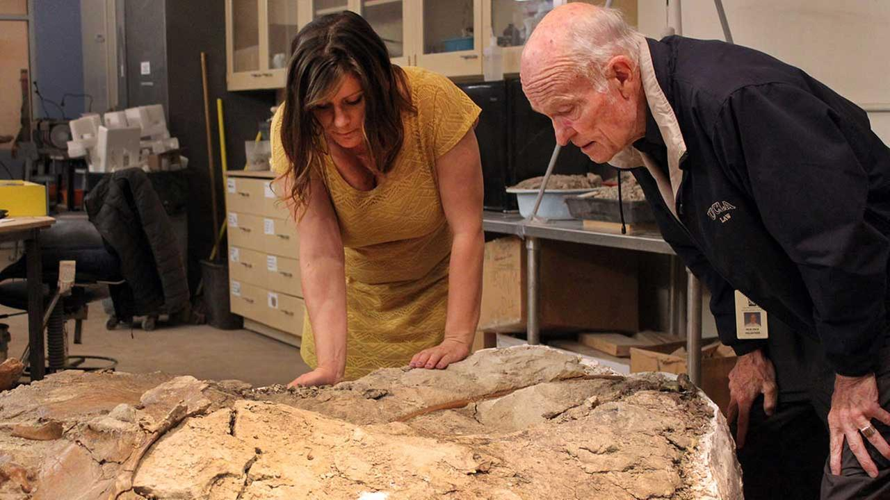 Amanda Cantrell, left, a geoscience collections manager at the New Mexico Museum of Natural History and Science, looks at the museums latest find with docent Dick Yeck.