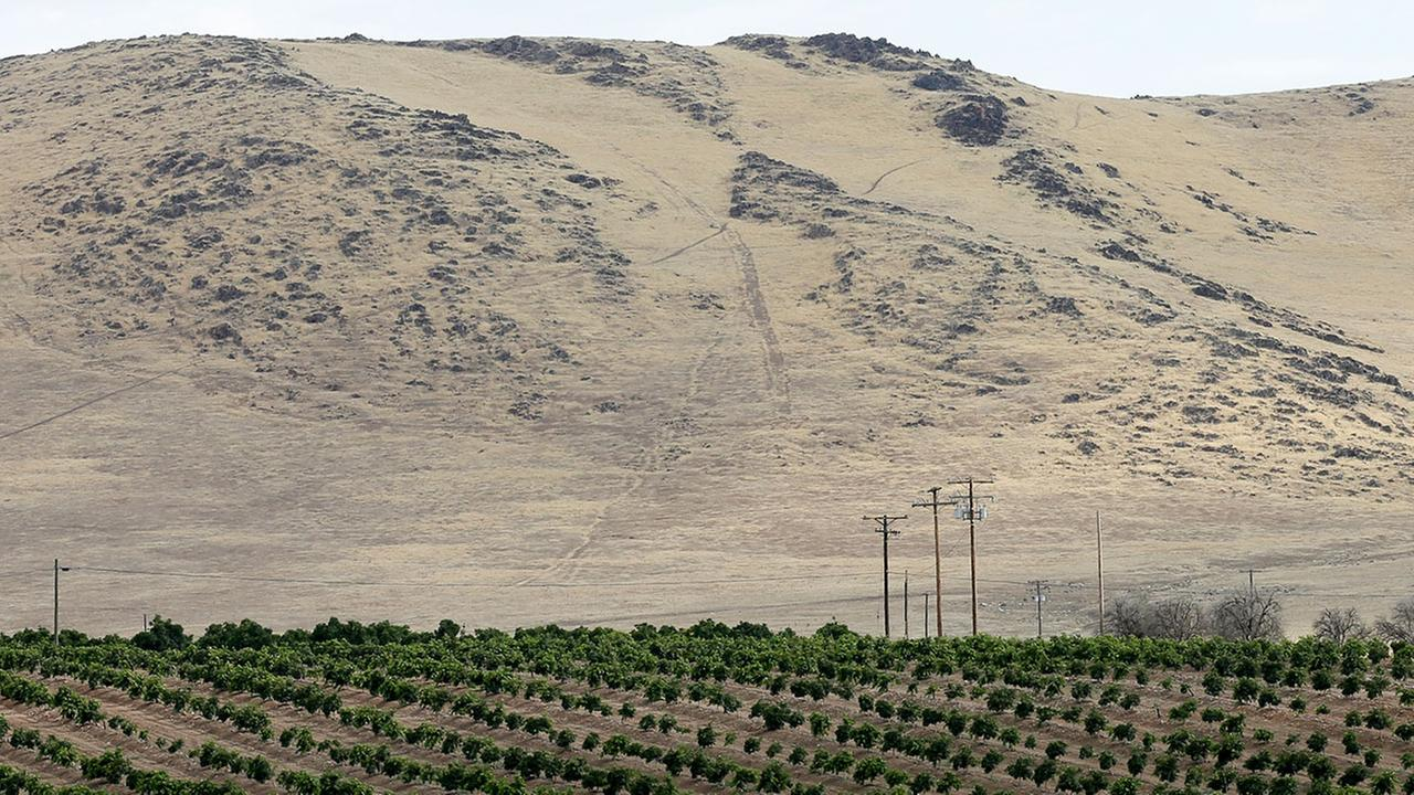 Groves of citrus trees sit below a barren hillside in Tulare County, outside of Porterville, Calif.