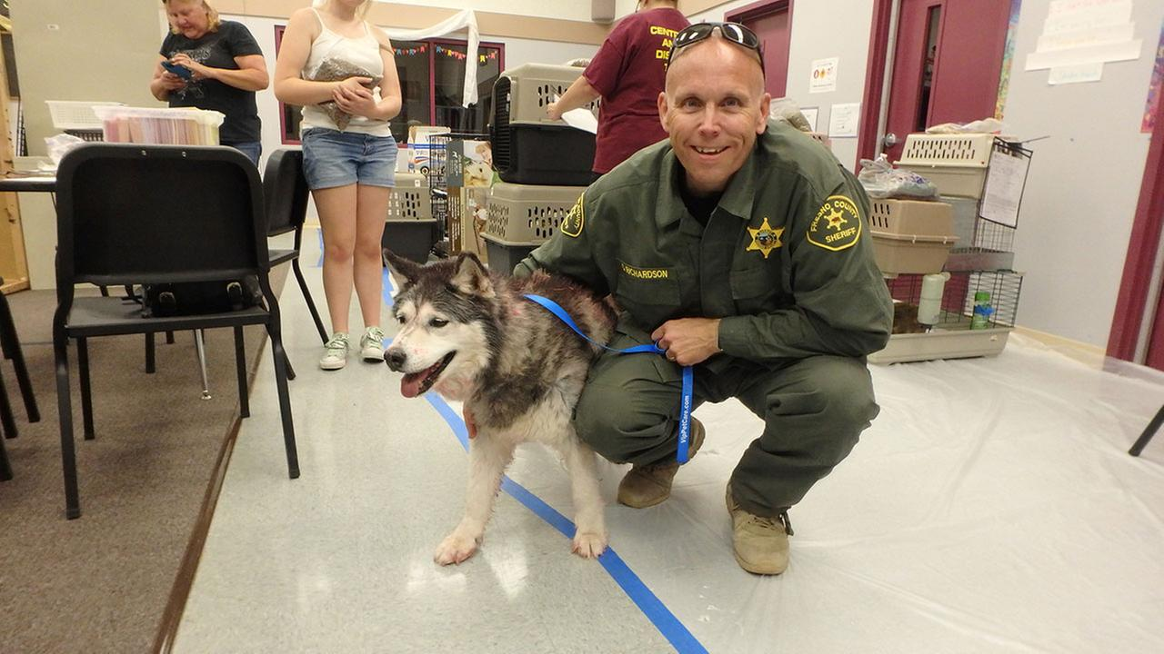 According to the Fresno County Sheriffs Office, deputies rescued a Husky named Kiya when she was left behind during an evacuation because of a wildfire ( Fresno County Sheriff)